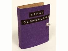 Renal Glomerulus